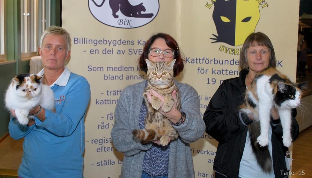 Pristagarna i sidoklassen fräckaste färg. Vinnare blev Maria Bergqvist (mitten) med sitt Brittiska korhår SE*Callebrallaz Beata. Med på bilden är också Christel Cristensens samt Gunilla Eriksson
